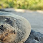 Amazing wildlife and the natural history of the Galapagos bring school outings to life