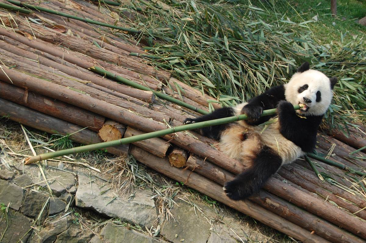 10 days of Pandas, Culture, Cuisine and the Magnificent Yangtze