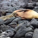 The Galapagos Islands – The Eighth Wonder of the World