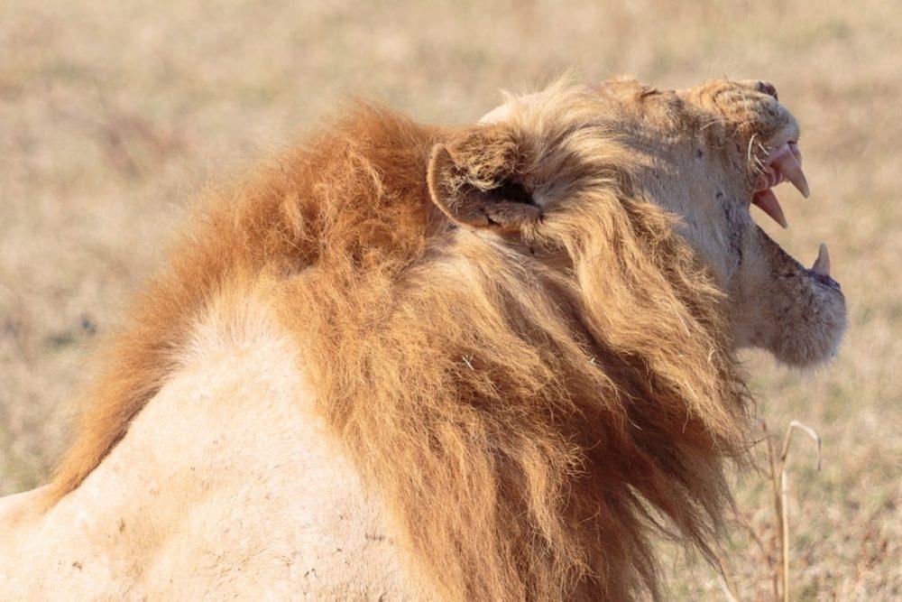 Acacia Africa releases 2018 Safari Wishlist