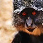 Lilongwe Wildlife Trust looking for Volunteers to research Samango Monkeys in Malawi