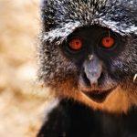 Lilongwe Wildlife Trust looking for Volunteers to research Samango Monkeys in Malawi