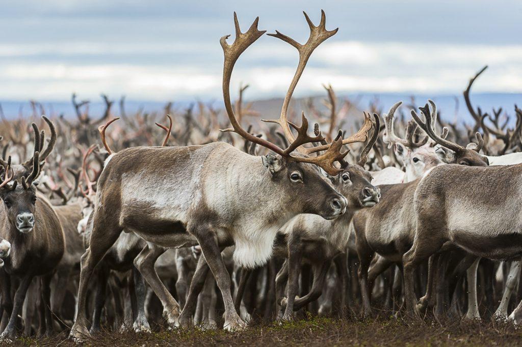Vindelälven-Juhtatdahka Biosphere Reserve - Sweden. © UNESCO/Ola Jennersten/WWF/Vindelälven-Juhtatdahka Biosphere Reserve - Sweden