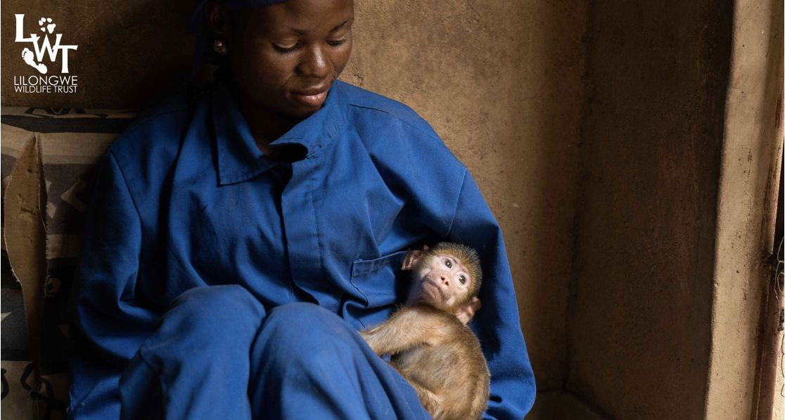 Malawi's only wildlife sanctuary needs your urgent help
